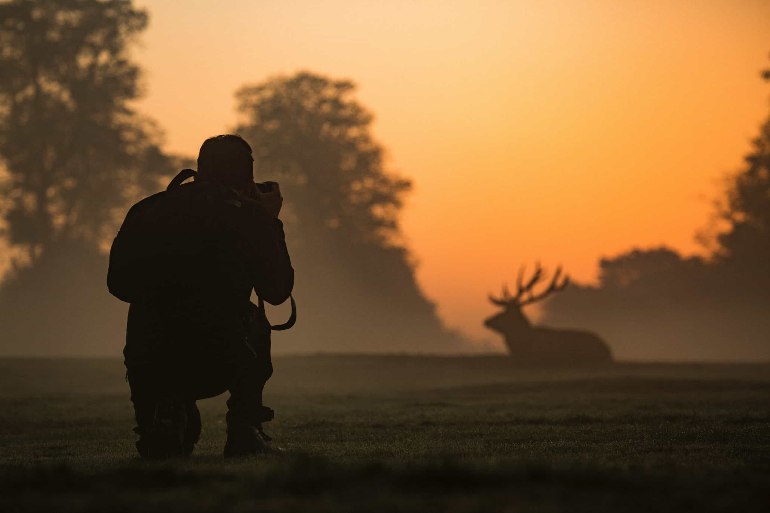 Enhance Your Wildlife Photography Skills With These Tips