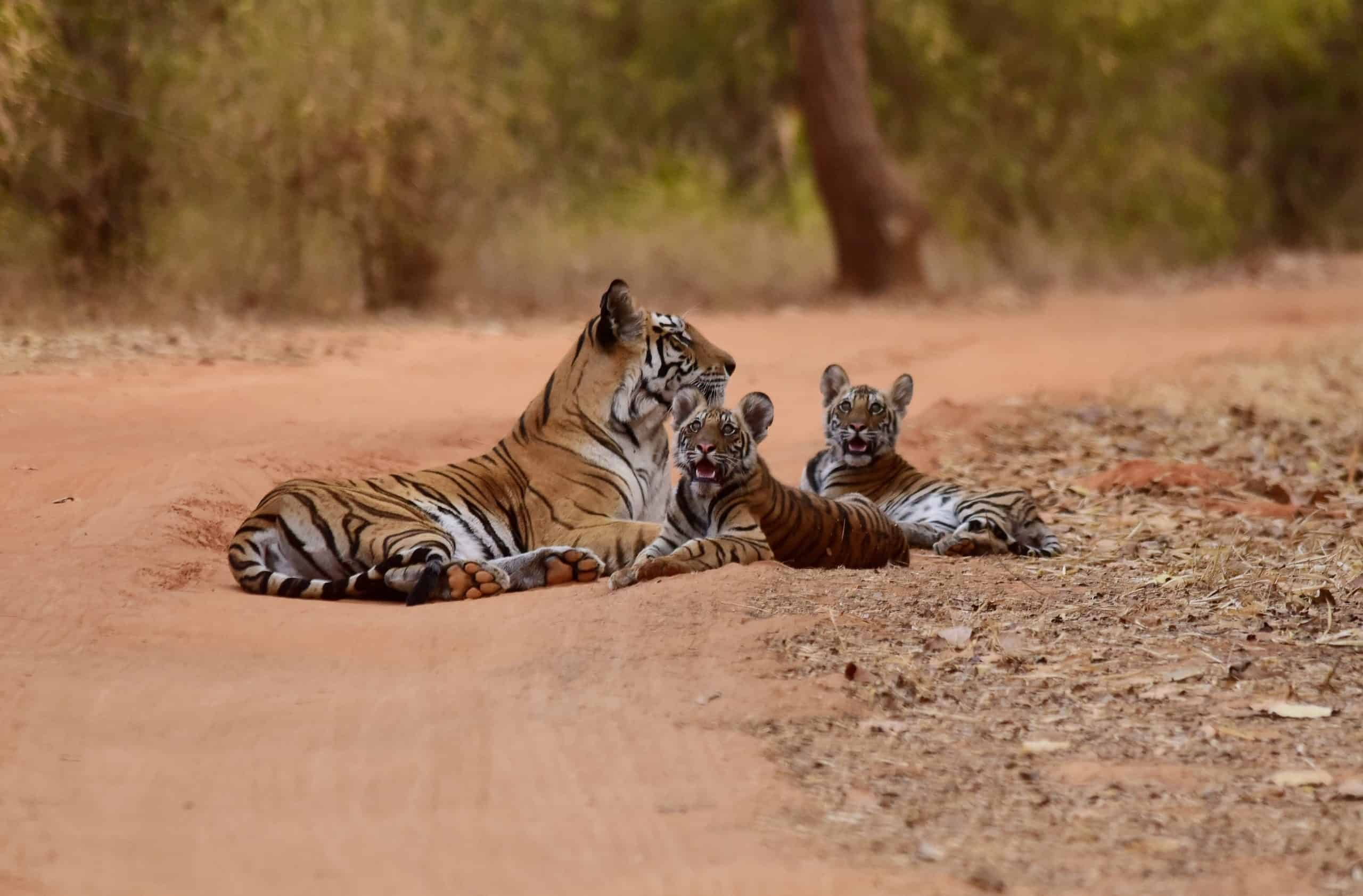 Some Interesting Ways To Click The Beautiful Wild Animals Pictures