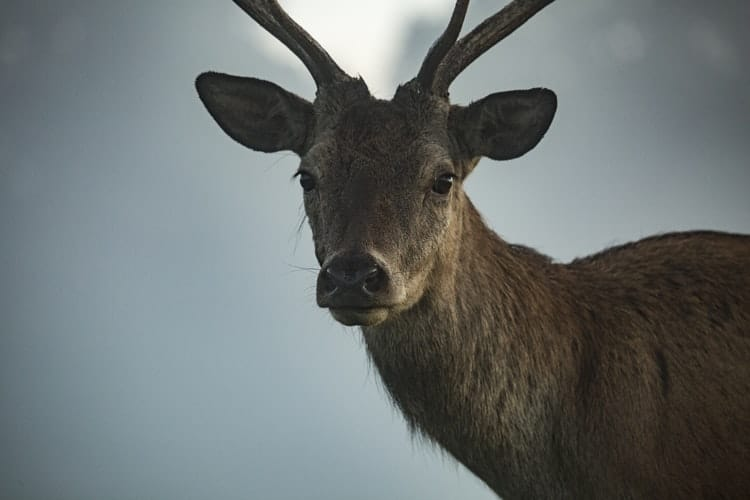 What To Do For A Great Wildlife Photo